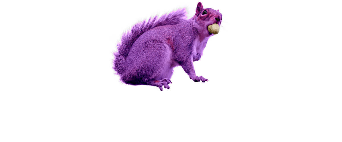 The hunt for purple squirrels: Recruiter excels at finding the impossible